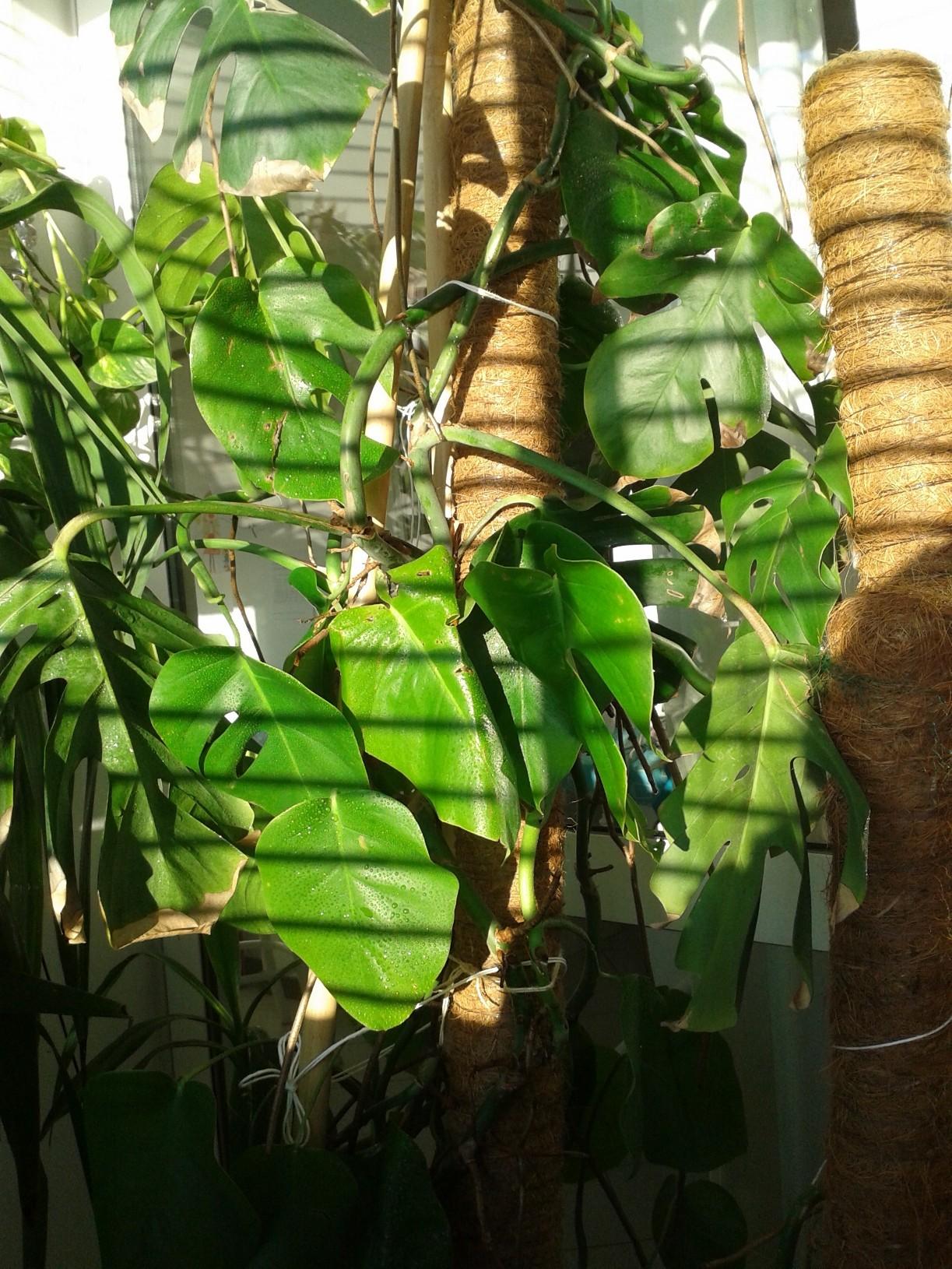 Piccole piante crescono dallarivallorto for Piccole piantine